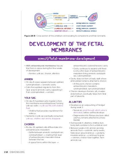 Figure 28.13 Cross section of the umbilical cord revealing its components and their remnants.  DEVELOPMENT OF THE FETAL MEMBRANES osms.it/fetal-membrane-development ▪ AKA extraembryonic membranes: tissues that form in uterus during first few weeks of development ▫ Amnion, yolk sac, chorion, allantois  AMNION  ▪ On day 8, space appears between epiblast, cytotrophoblast → amniotic cavity ▪ Cells from epiblast migrate to form thin layer around amniotic cavity, separating it from cytotrophoblast → amnion  YOLK SAC  ▪ On day 9, hypoblast cells migrate to form thin membrane around blastocoel, forming yolk sac walls → yolk sac fills with vitelline fluid ▫ Vitelline fluid provides nourishment for embryo ▪ Nutrients in yolk sac eventually consumed, yolk sac, vitelline duct shrink, disappear  CHORION  ▪ By day 10, epiblast cells differentiate into extraembryonic mesoderm ▫ Settle between amniotic cavity/yolk sac, cytotrophoblast → creating thick layer of extraembryonic mesoderm tissue between the two ▫ A space forms within this layer →  218 OSMOSIS.ORG  extraembryonic coelom/chorionic cavity ▫ Cavity continues to expand until there is only a thin layer of extraembryonic mesoderm lining amniotic cavity/yolk sac, cytotrophoblast ▪ Cavity does not form at body stalk where embryoblast remains attached to chorion ▫ At this point, chorion contains extraembryonic mesoderm, cytotrophoblast, syncytiotrophoblast ▪ Chorion develops chorionic villi, invades endometrium, eventually helps form fetal part of placenta  ALLANTOIS  ▪ Develops as an outpouching of hindgut during week 3 ▫ Serves as canal through which urine is eliminated, before urethra develops ▫ Degenerates into fibrous structure called urachus, remains attached to urinary bladder ▪ During week 4, allantois, vitelline duct, body stalk combine to form umbilical cord ▪ Between weeks 4–8, amnion secretes amniotic fluid → amniotic cavity swells, folds down around embryo → protects, insulates embryo → continues to grow → amnion, ch