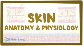 Video poster for Skin anatomy and physiology