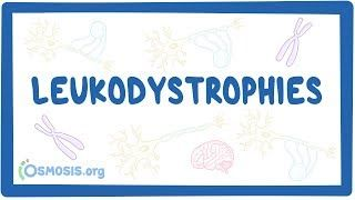 Video poster for Leukodystrophy