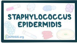 Video poster for Staphylococcus epidermidis