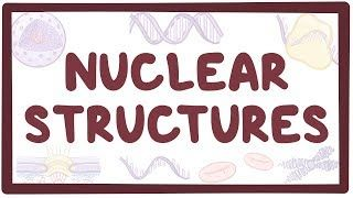 Video poster for Nuclear structure