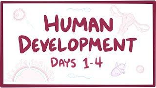 Video poster for Human development days 1-4