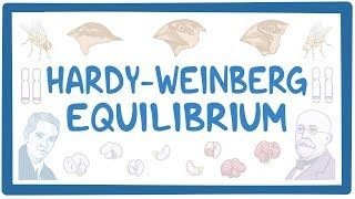 Video poster for Hardy-Weinberg equilibrium