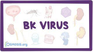 Video poster for BK virus (Hemorrhagic cystitis)