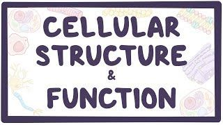 Video poster for Cellular structure and function