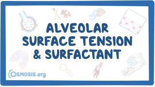 Video poster for Alveolar surface tension and surfactant