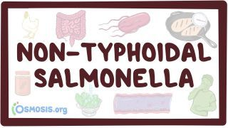 Video poster for Non-typhoidal Salmonella