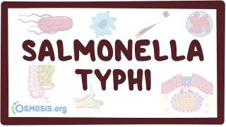Video poster for Salmonella typhi (typhoid fever)