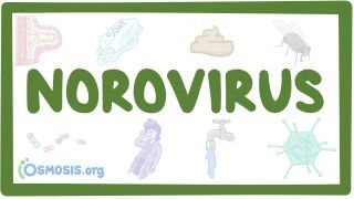 Video poster for Norovirus