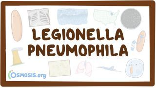 Video poster for Legionella pneumophila (Legionnaires disease and Pontiac fever)