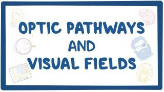 Video poster for Optic pathways and visual fields