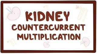 Video poster for Kidney countercurrent multiplication