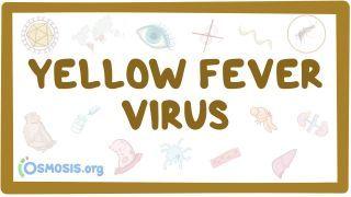 Video poster for Yellow fever virus