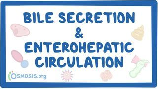 Video poster for Bile secretion and enterohepatic circulation