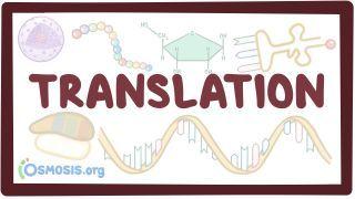 Video poster for Translation of DNA