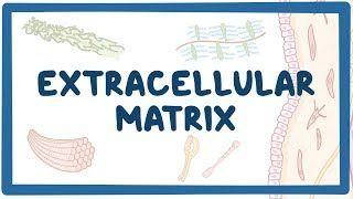 Video poster for Extracellular matrix