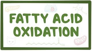 Video poster for Fatty acid oxidation