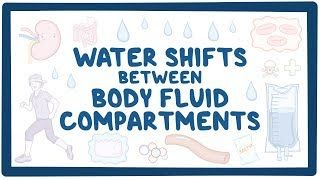 Video poster for Water shifts between body fluid compartments