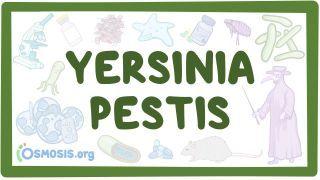 Video poster for Yersinia pestis (Plague)