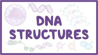 Video poster for DNA structure