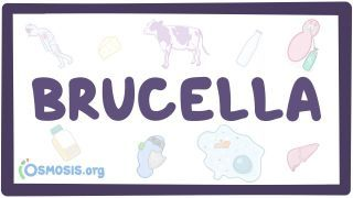 Video poster for Brucella