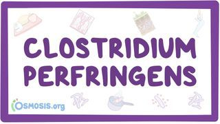 Video poster for Clostridium perfringens