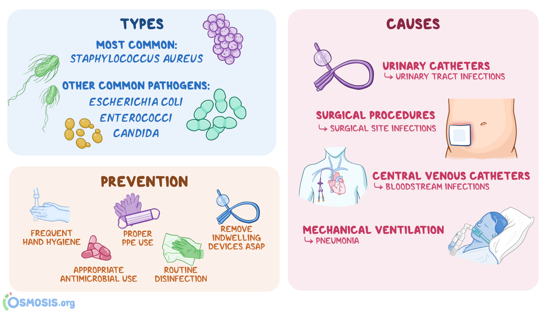 Nosocomial Infection: What Is It, Causes, Prevention, and More   Osmosis