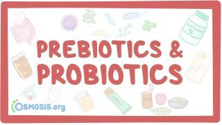 Video poster for Prebiotics and probiotics