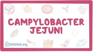 Video poster for Campylobacter jejuni