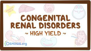 Video poster for High Yield: Congenital renal disorders