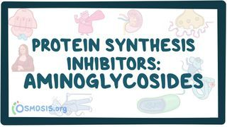 Video poster for Protein synthesis inhibitors: Aminoglycosides