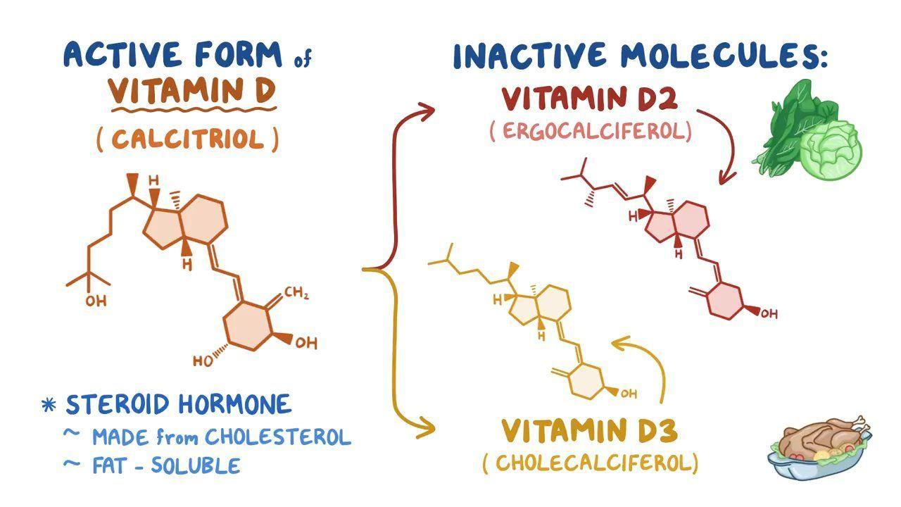 Links between cholesterol vitamin d and a steroid hormone testocyp alpha pharma erfahrung