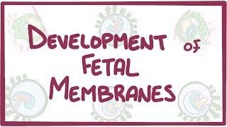 Video poster for Development of the fetal membranes