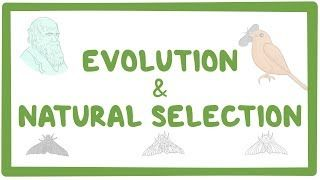 Video poster for Evolution and natural selection