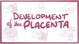 Video poster for Development of the placenta
