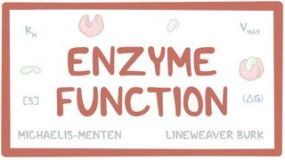 Video poster for Enzyme function