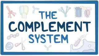Video poster for Complement system