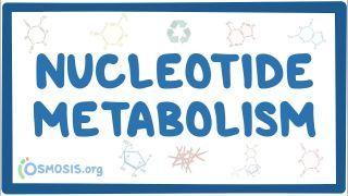 Video poster for Nucleotide metabolism