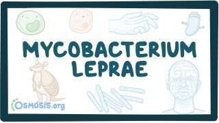 Video poster for Mycobacterium leprae