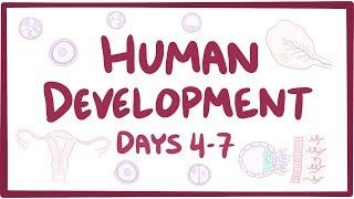 Video poster for Human development days 4-7
