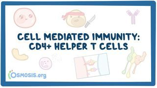 Video poster for Cell mediated immunity of CD4 cells