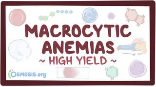 Video poster for High Yield: Macrocytic anemias