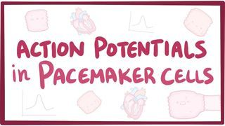 Video poster for Action potentials in pacemaker cells