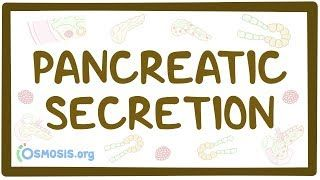 Video poster for Pancreatic secretion