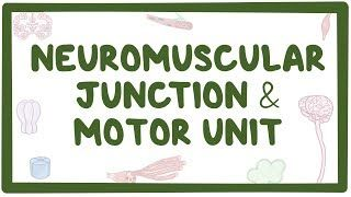 Video poster for Neuromuscular junction and motor unit