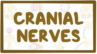 Video poster for Cranial nerves