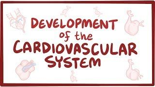 Video poster for Development of the cardiovascular system
