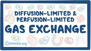 Video poster for Diffusion-limited and perfusion-limited gas exchange