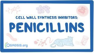Video poster for Cell wall synthesis inhibitors: Penicillins