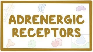 Video poster for Adrenergic receptors